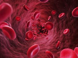 3d rendered illustration - blood cells
